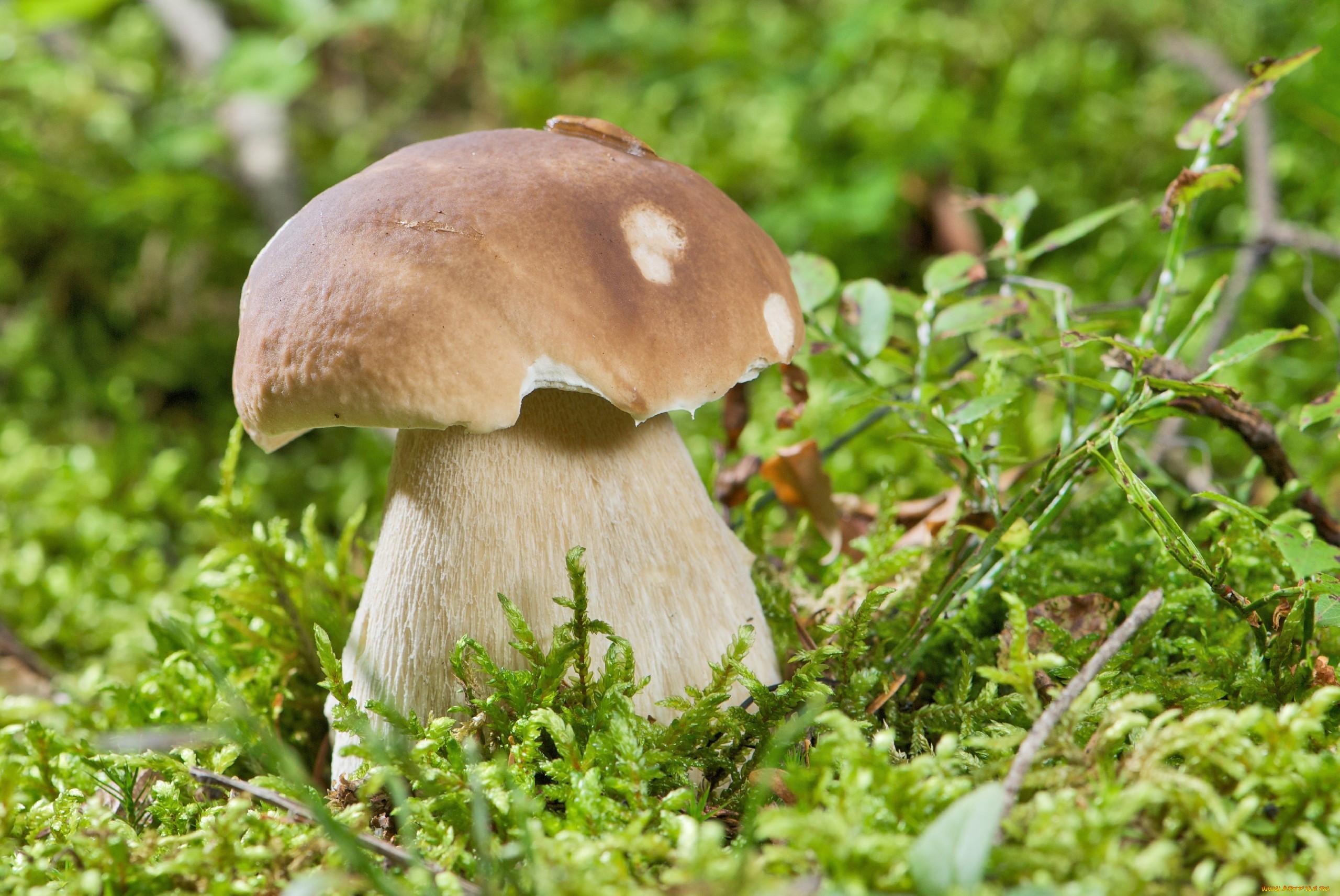 как выглядит ложный белый гриб фото саркастических подъебов